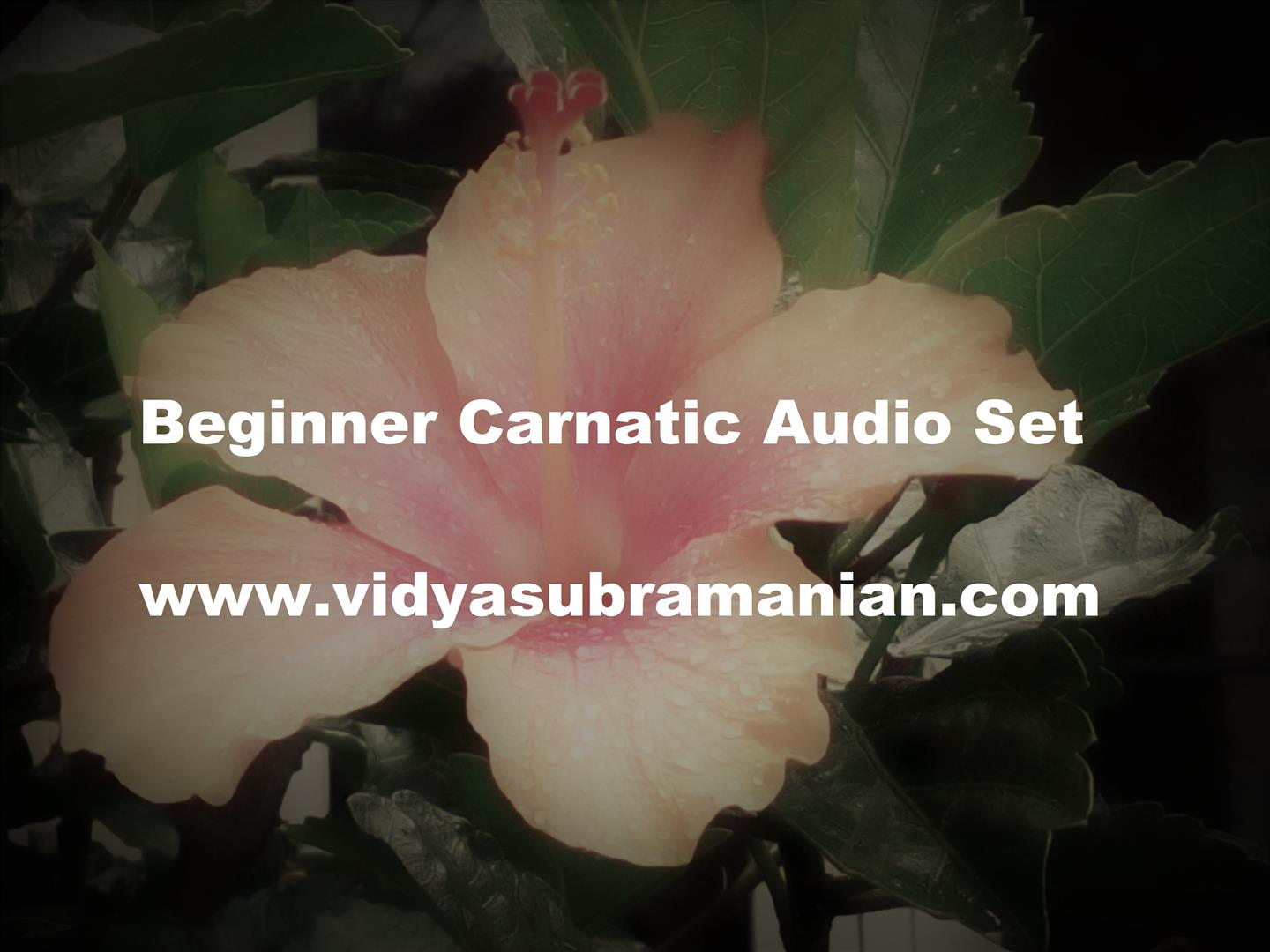 Vidya Subramanian - Customized, Live Online lessons and classes in